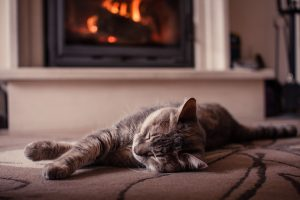 cat asleep in front of cosy fire - we look after our pets
